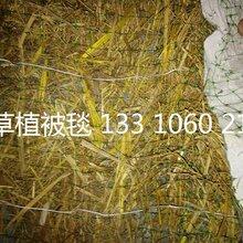 山坡绿化椰丝毯膨润土防水毯生态毯抗冲生物毯植被毯植草毯