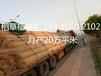 植生毯边坡护理绿化椰丝毯植被毯cf网抗冲生物毯节能环保