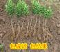 贺州果树苗批发哪里的优质