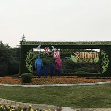 山东园艺雕塑造型,植物绿雕,绿色雕塑施工