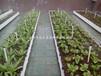 屋顶有机蔬菜种植、楼顶绿化建造