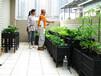 家庭阳台种菜技术支持公司四川成都尚鼎丰农业生态种植服务