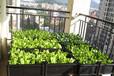 四川成都一米家庭菜园加盟,1米私家菜园价格-尚鼎丰都市农业