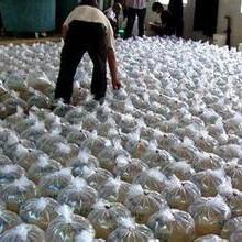 天津地区南美对虾苗批发美国SIS一代对虾苗淡化出售