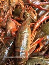 北京小龙虾多少钱一斤