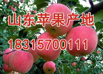 沂水縣宏良果蔬購銷中心