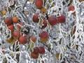 芬兰冷冻蓝莓进口选择海运还是空运海运的时间多长图片