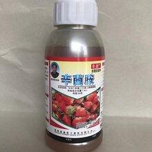 草莓苗期炭疽病立枯病霜霉病特效杀菌剂
