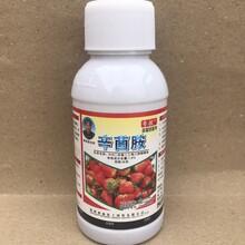 草莓炭疽病、灰霉病、叶斑病蛇眼病好农药防治草莓炭疽病、灰霉病