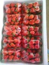 草莓膨大催红增甜不空心不软皮口感好果色均匀个大品质好