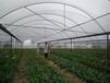 鲜花;蔬菜种植批发基地