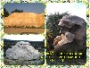 中山公园园林景观石产地直销精美黄蜡石天然太湖石假山石鹅卵石天然台面石