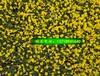 北京草花基地批发宿根花卉花坛节日用花草花价格低质量好