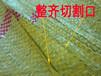 塑料编织袋生产厂家复合编织袋批发复合编织袋报价