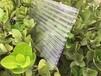 供應鋼結構陽光板鋼結構廠房鋼結構雨棚陽光板十年品質訂購