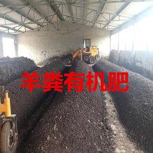 河南羊粪有机肥厂家,焦作羊粪有机肥多少钱一吨,发酵羊粪有机肥哪个厂家的好