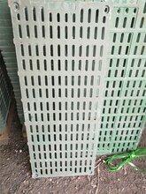 復合材料漏糞板復合材料漏縫地板母豬用復合材料漏糞地板圖片