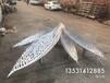 厦门定制不锈钢树叶雕塑厂家设计及报价
