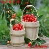 济宁高产黑珍珠樱桃苗培育要求