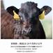 上海联犇黑椒牛排150g厂家直销批发西餐咖啡