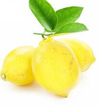 康柠源黄柠檬产地直销图片