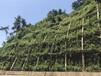 邊坡綠化專用添加劑有機纖維廠家銷售