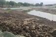 景觀河道河底生態修復團粒結構改良劑