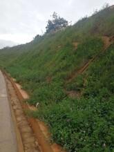 廣西邊坡修復工程綠化噴播專用土壤保水劑粘合劑圖片