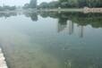 陜西河道黑臭水體生態修復工程底質改良劑