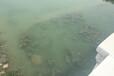 江蘇黑臭河道底泥生態修復底質改良劑