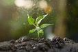 遼寧植物花卉抗旱法國愛森進口保水劑
