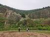 榆林礦山巖石邊坡生態修復工程團粒劑