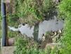 浙江河道湖泊水體凈化生態修復工程多功能凝聚復合劑