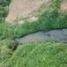 上海城市污染河道修復水體凈化劑
