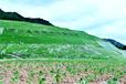 廣東日本彩光邊坡噴播綠化團粒劑