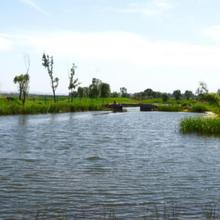 蚌埠城市河道生態修復技術底質改良劑圖片