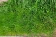 廣西高性能生態基材土壤增活有機基質