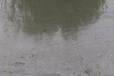 漢中黑臭水體治理工程水體凈化劑