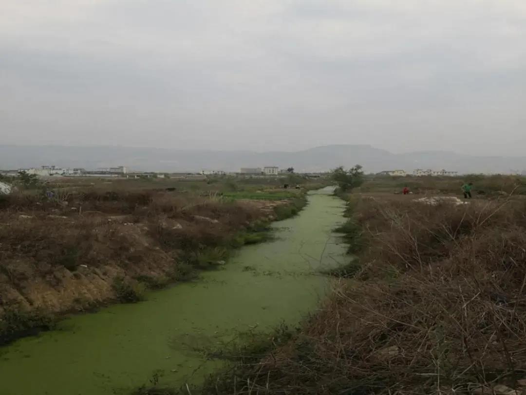 泰安黑臭水体河道生态修复底泥修复剂