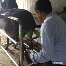 全新福榮萊驢用B超機C60操作簡單,母驢測孕B超圖片