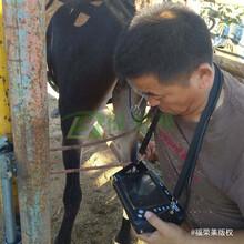 高清福榮萊驢用B超機C60款式新穎,驢用B超測孕儀圖片