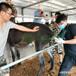 可水洗福榮萊驢用B超機C60質量可靠,母驢測孕B超