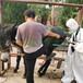 福榮萊母驢懷孕測孕器,可水洗福榮萊驢用B超機C60放心省心