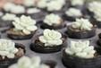 浙江温州地区出售各种类型的兰花,品质好,数量多,发货快,专业售后保障