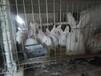 云南昭通大型种兔繁育基地