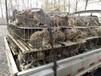 兔子养殖加盟,种兔品种,种兔价格