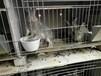 中国较大的兔子养殖场,包回收的兔子养殖场
