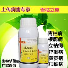 治療黃瓜霜霉病特效藥靚果安圖片