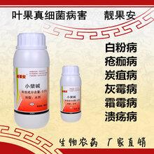 沒有藥害的柑橘潰瘍病殺菌劑預防柑橘潰瘍病圖片