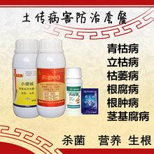 防治生姜姜瘟病和生姜茎基腐病特效药青枯立克地力旺图片